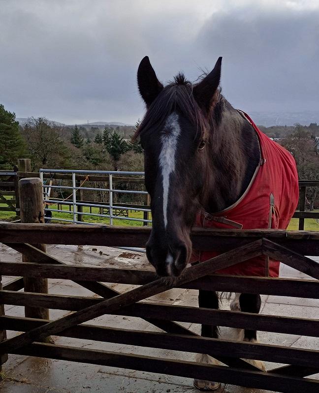 RDA horse
